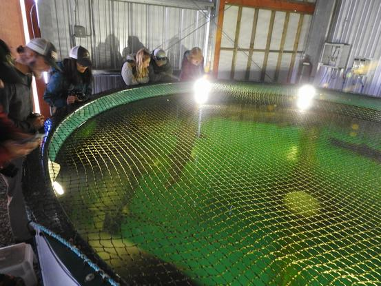 Tank at Sturgeon Hatchery